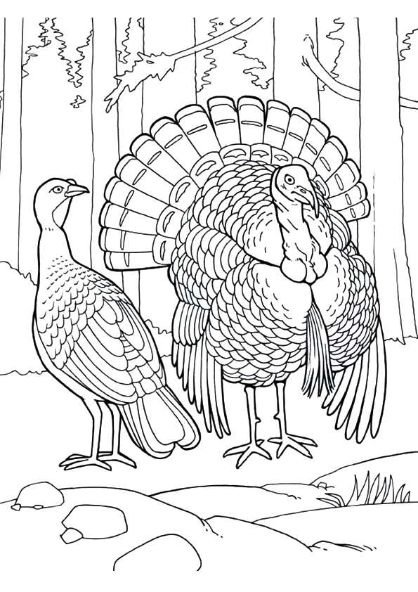 Eastern Wild Turkey coloring pages