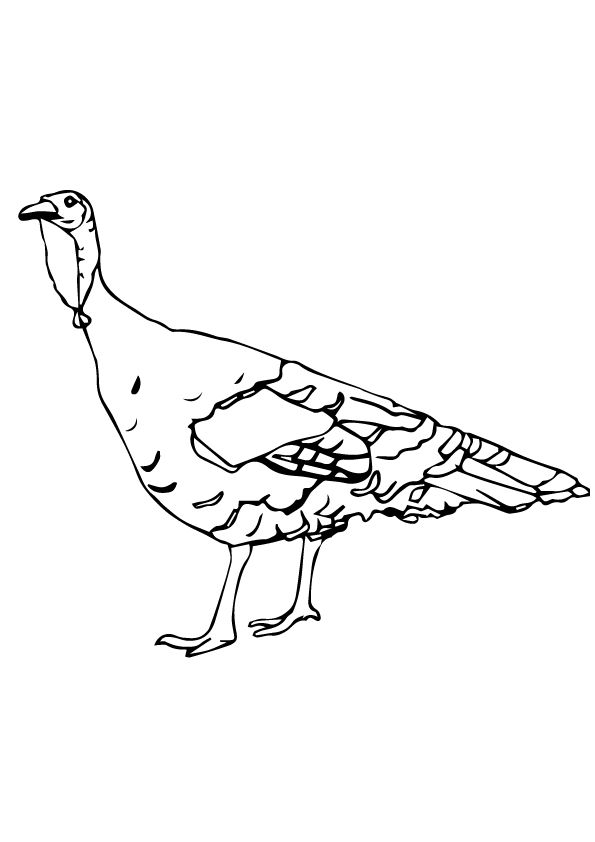 Rio Grande coloring pages