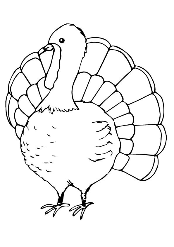 Cute Turkey coloring pages