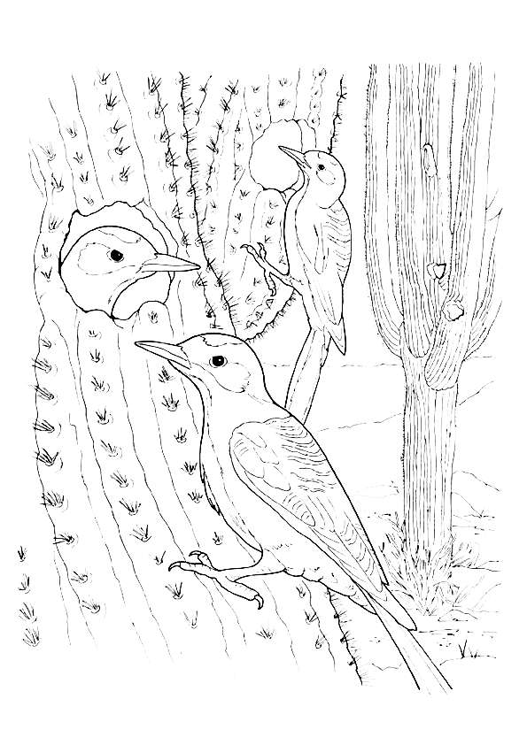 Cactus Wren coloring pages