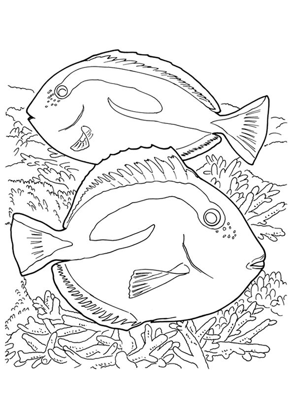 Blue Tang coloring pages
