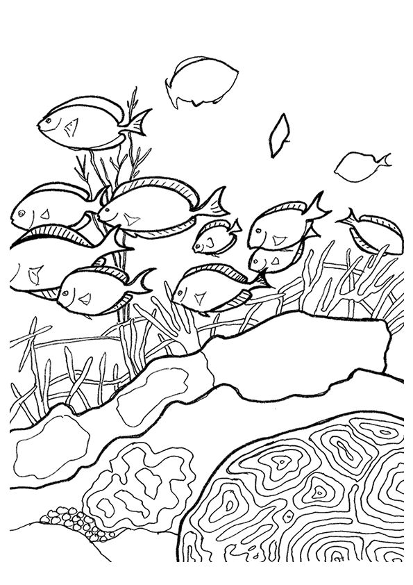 Coral Atoll coloring pages
