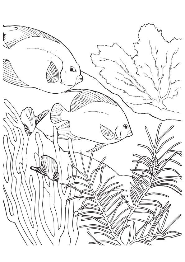 Coral Reef (Labeled) Coloring Page | 842x595
