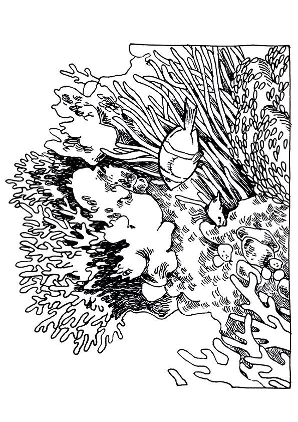 Honeycomb Shaped Coral coloring pages