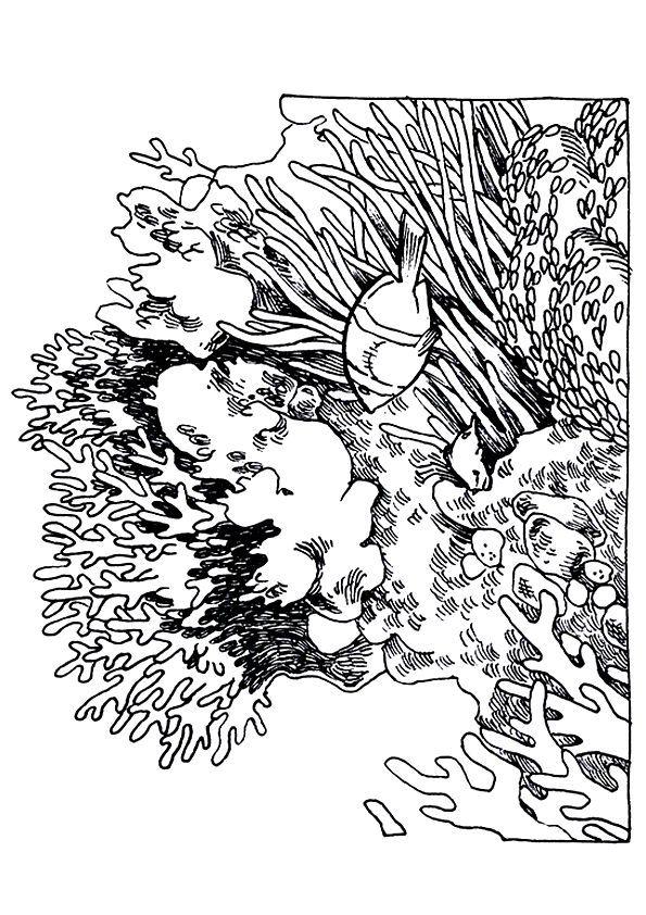 Honeycomb Shaped Coral
