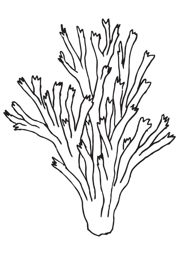 Pillar Coral coloring pages