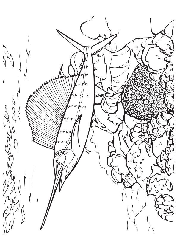 Swordfish Near Reef coloring pages