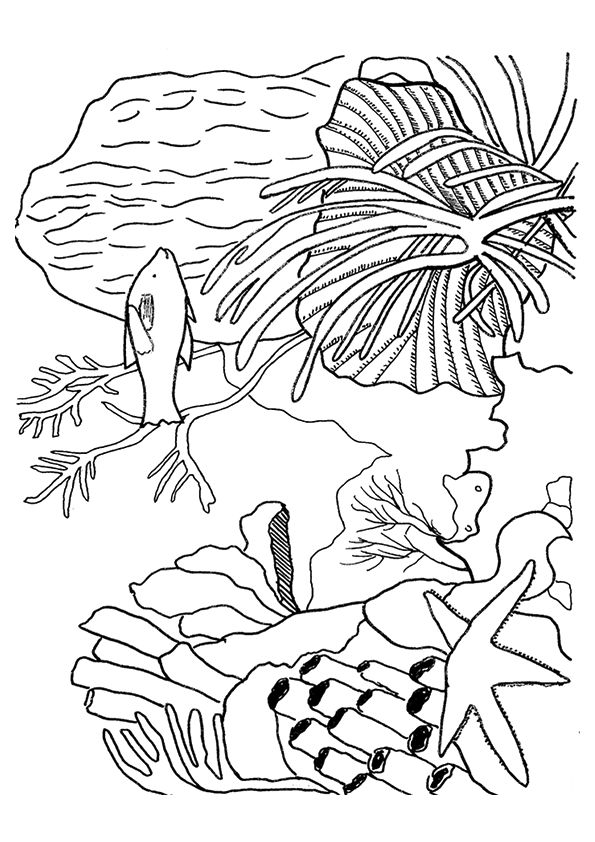 Vibrant Coral Reef coloring pages
