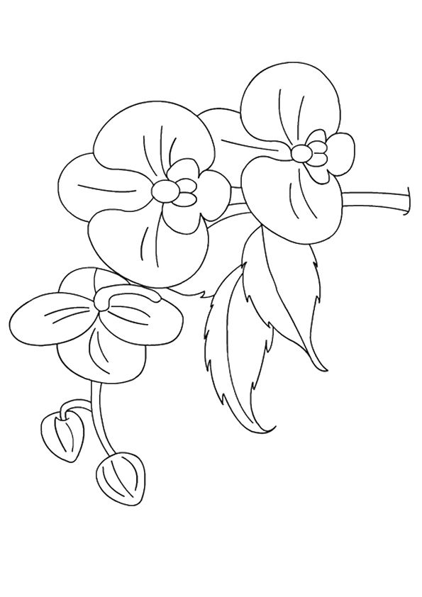 Orchids Flower coloring pages