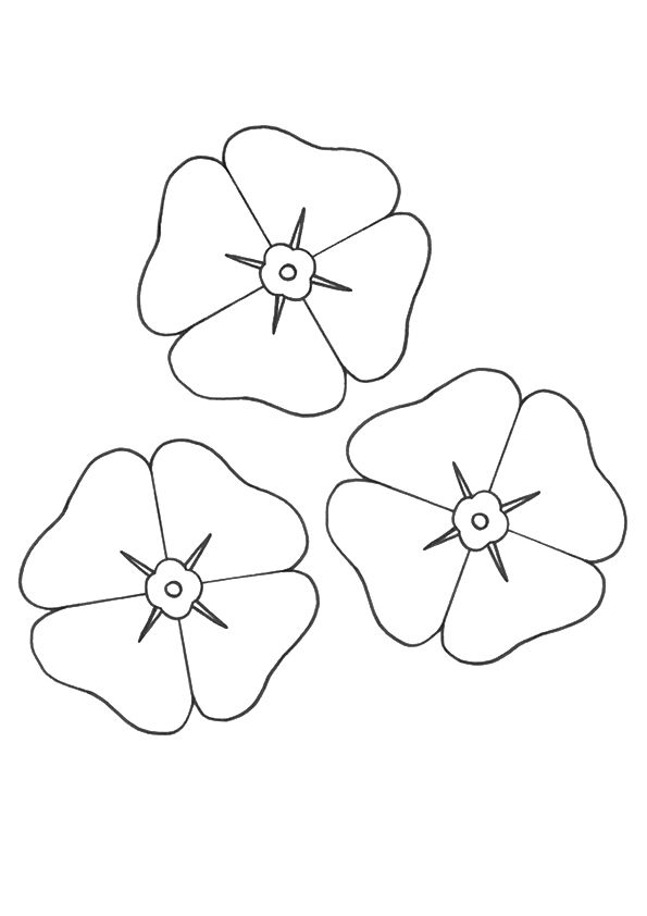 Poppy Flower coloring pages