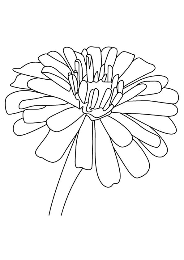 Zinnia Flower coloring pages