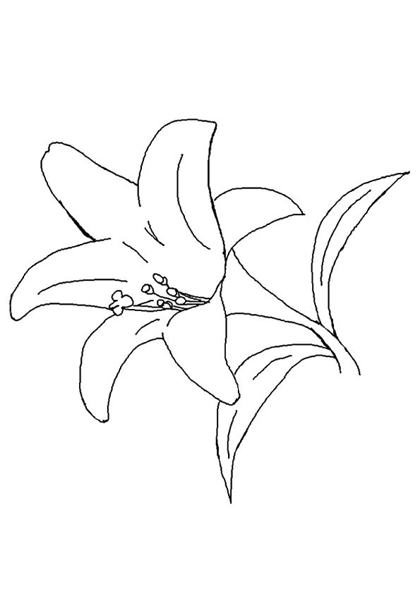 The Lily coloring pages