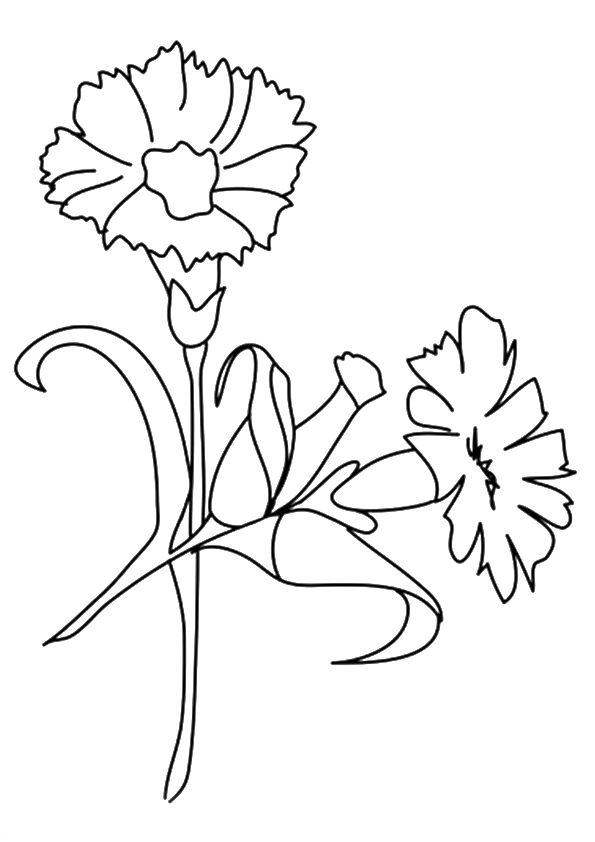 The Carnation coloring pages