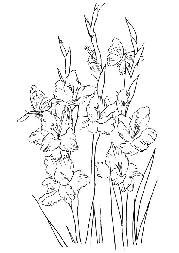 The Gladiolus coloring pages