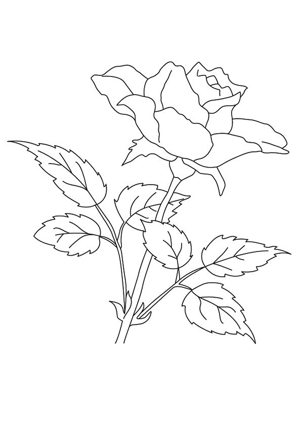 The Rose coloring pages