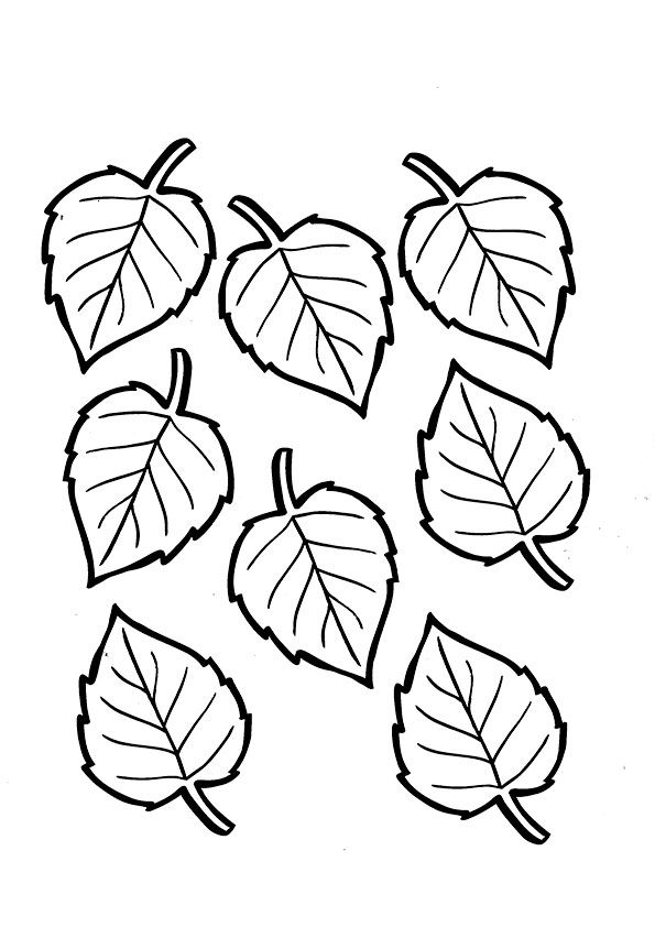 Birch Leaf coloring pages