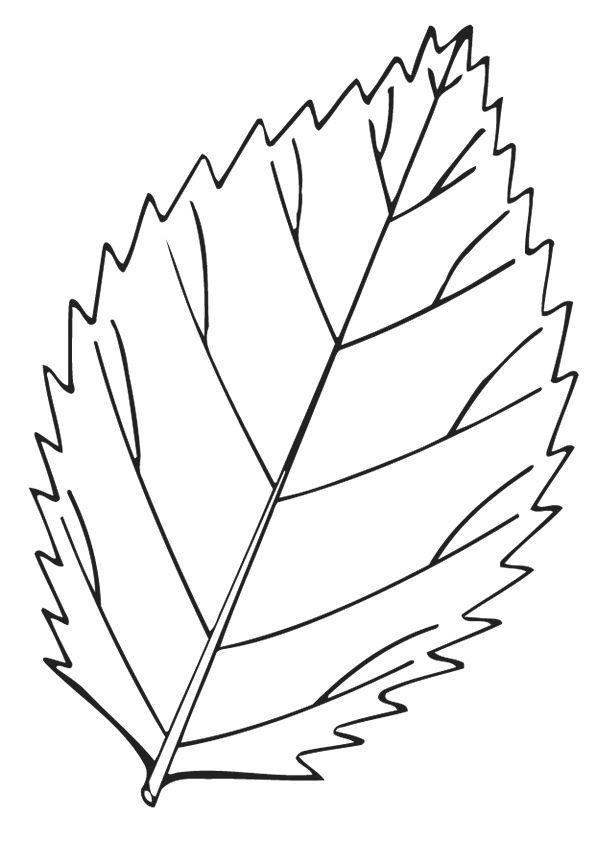 Elm Leaf coloring pages