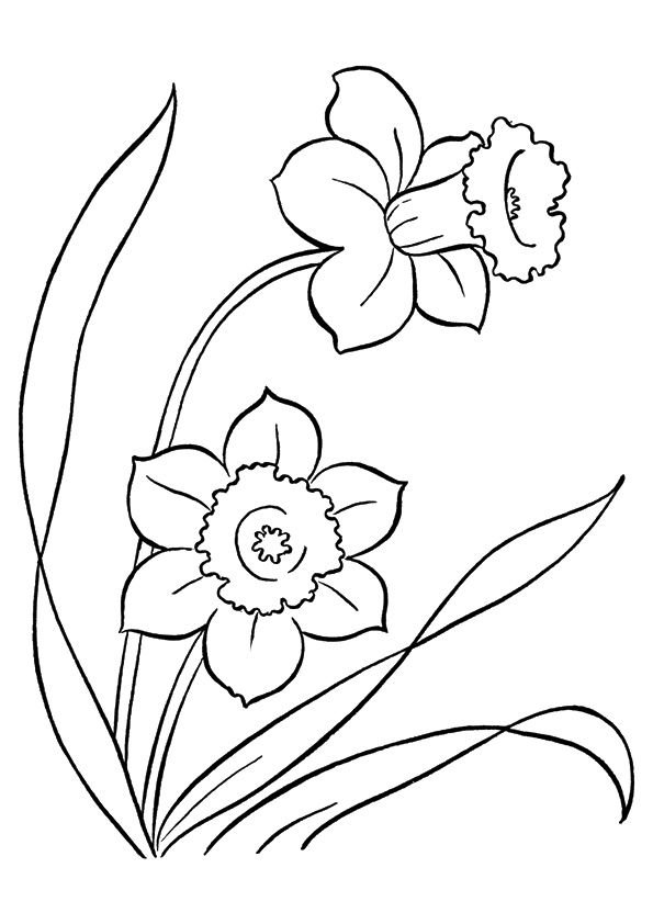 Daffodil Flower coloring pages