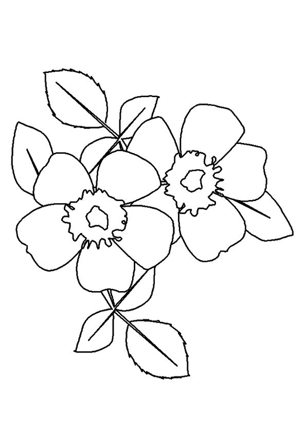 A wild prairie rose coloring pages