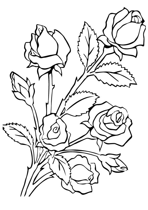five roses coloring pages