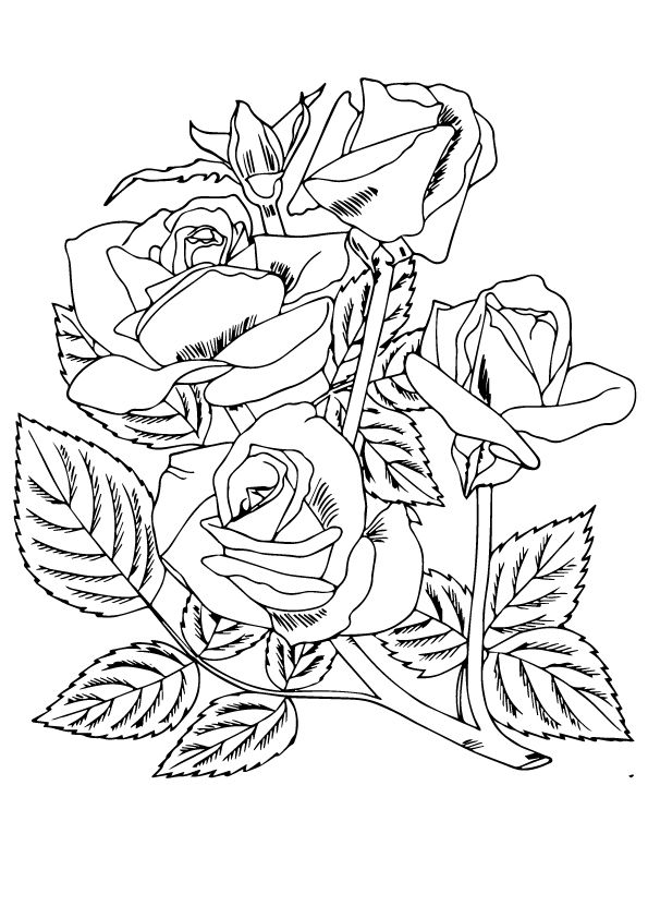 four roses coloring pages