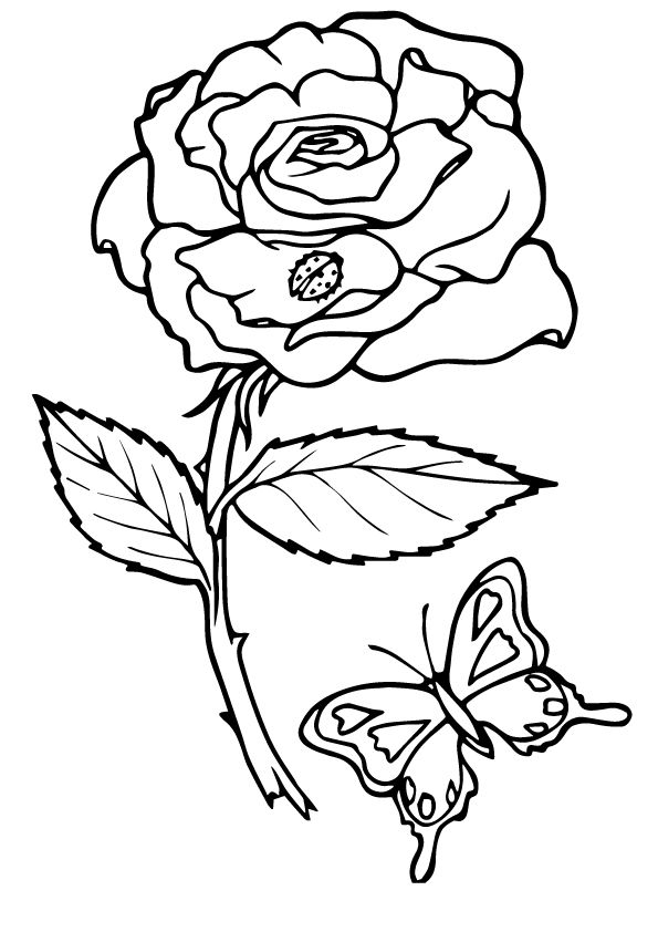 rose bug and butterfly coloring pages