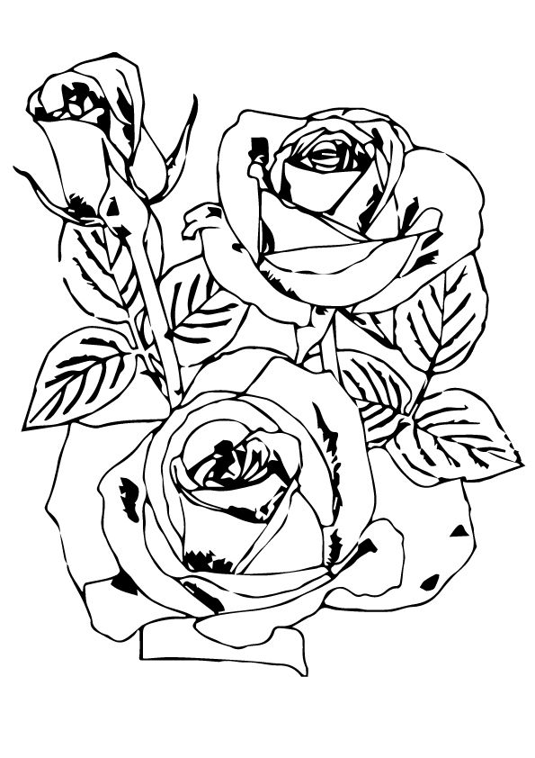 rose flowers coloring pages