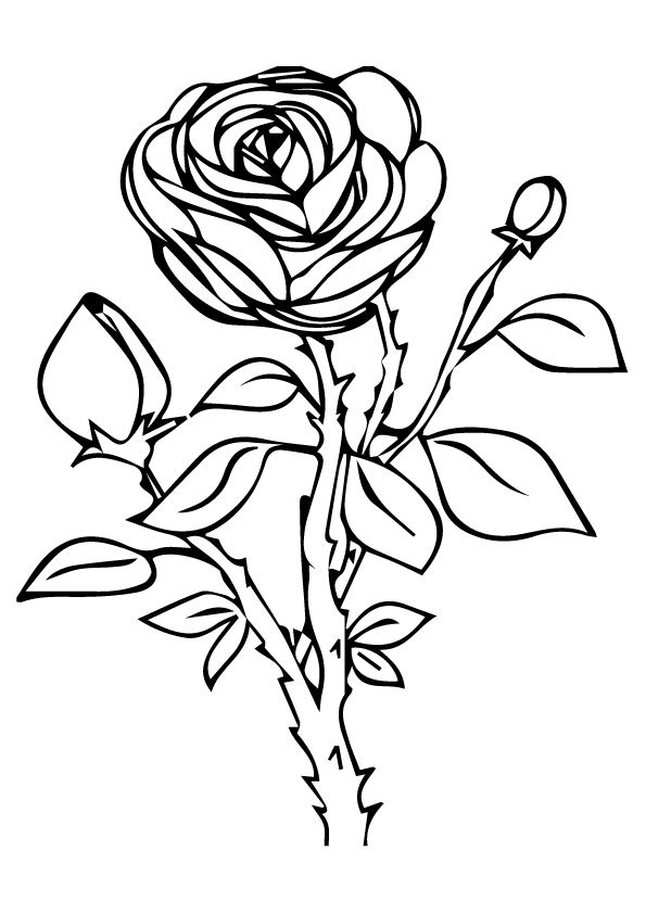 rose nature coloring pages