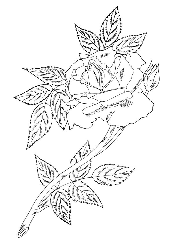 single rose with leaves coloring pages