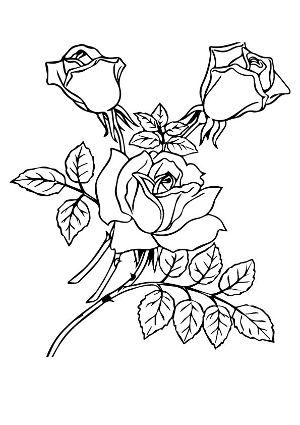 three roses with leaves