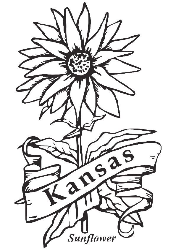 State Flower Of Kansas