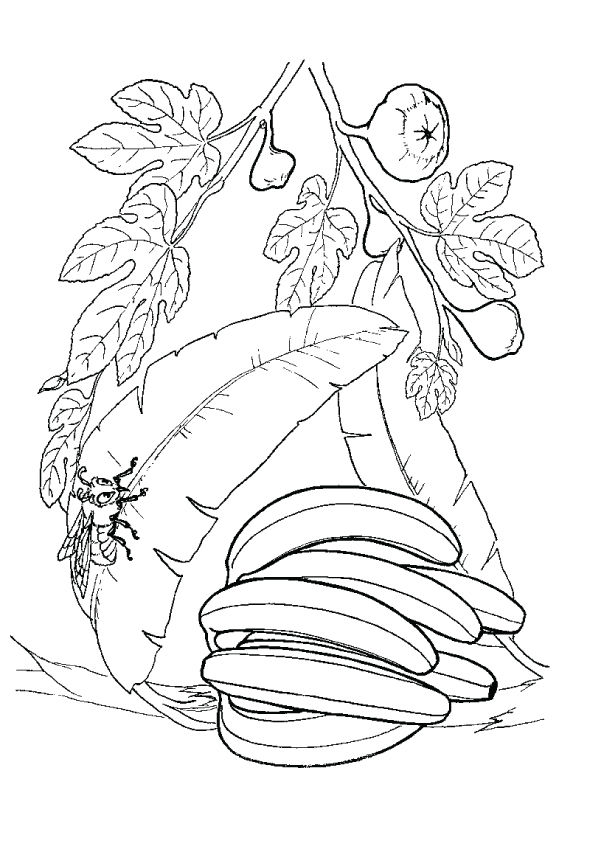 Banana Bunch & Bee coloring pages