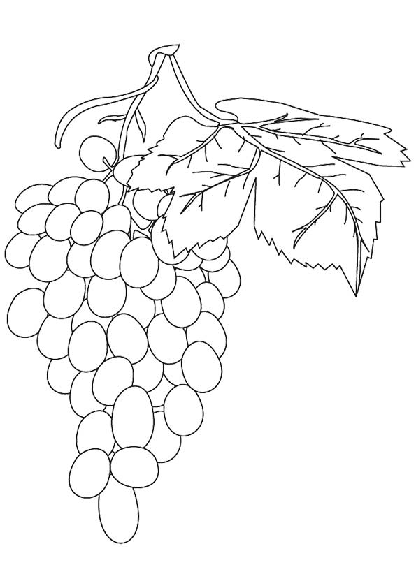 Vineful Grapes coloring pages