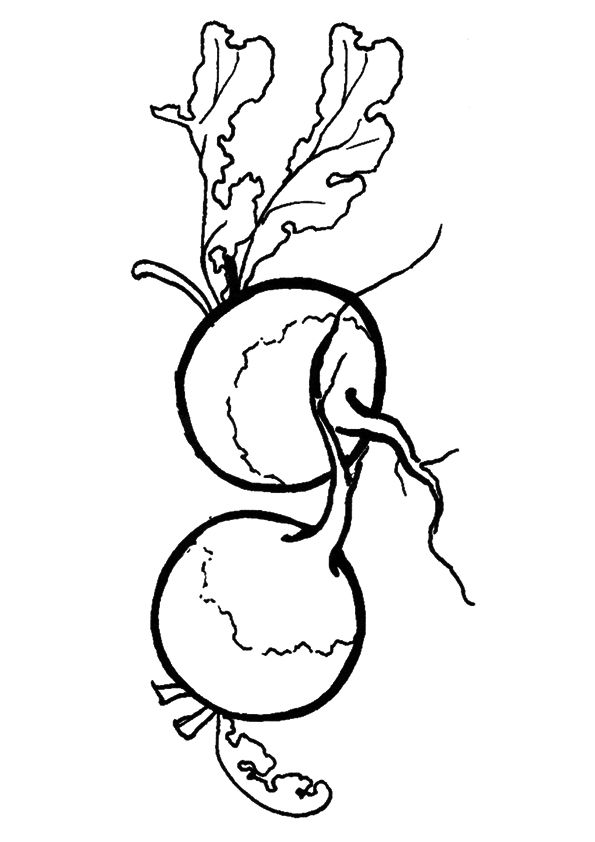 Fresh Beetroot coloring pages