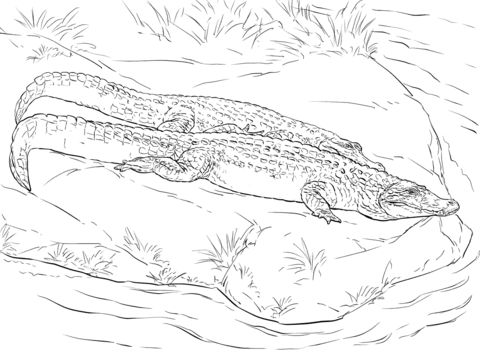 2 Black Caiman coloring pages