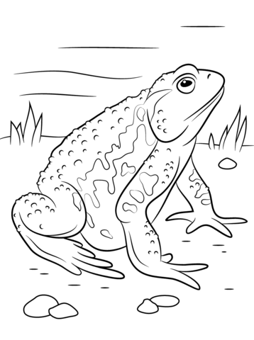 Asiatic Toad  coloring pages
