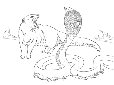 Cobra vs Mongoose coloring pages