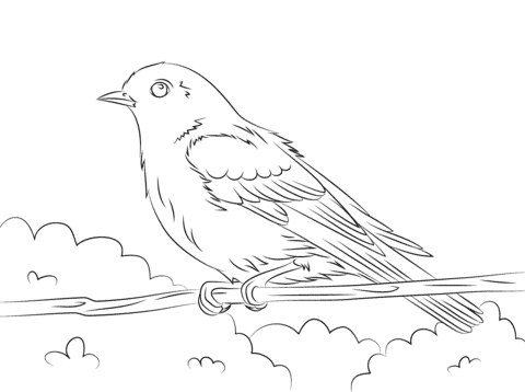 Eastern Bluebird coloring pages