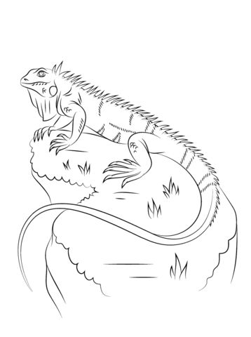 Large Iguana coloring pages