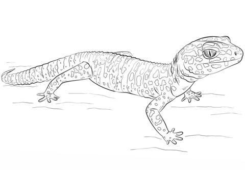 Leopard Gecko  coloring pages
