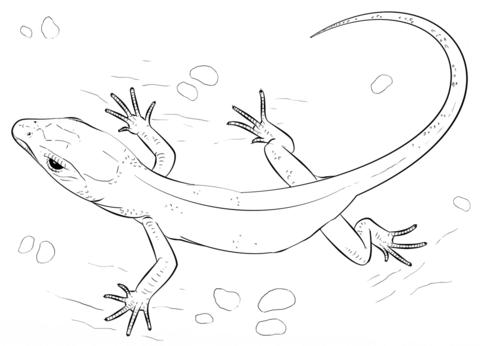 Small Lizard  coloring pages