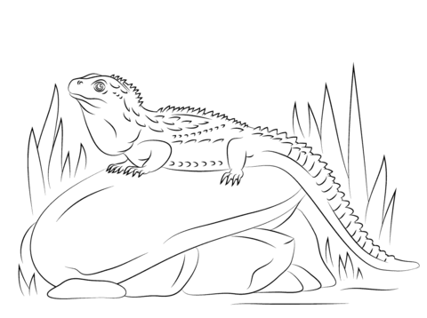 Tuatara Sitting Stone coloring pages