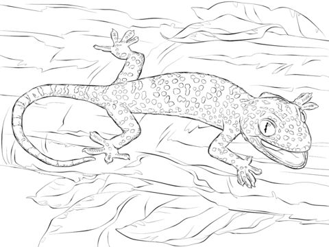 Tokay Gecko coloring pages