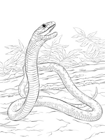 Black Mamba coloring pages