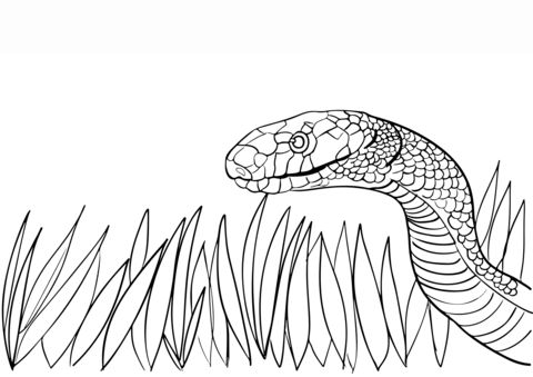 Dangerous Snake  coloring pages