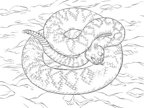 Diamond Back Rattle Snake coloring pages
