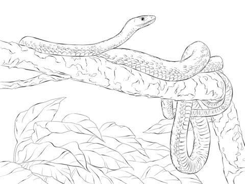 Green Mamba Snake coloring pages