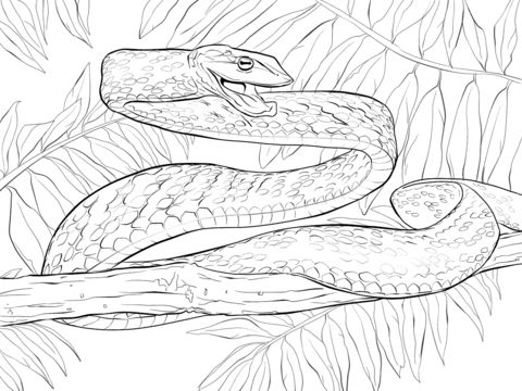 Green Vine Snake coloring pages