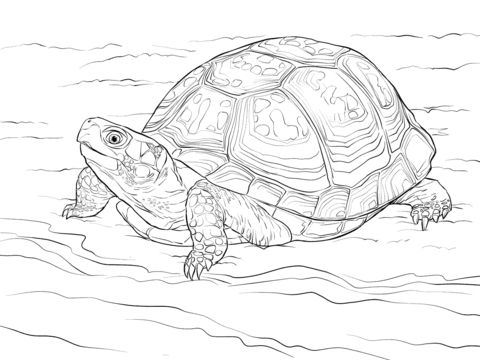 cute eastern box turtle coloring pages coloring pages