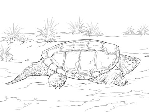 realistic common snapping turtle coloring pages
